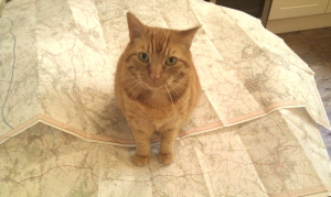 cat-on-a-map
